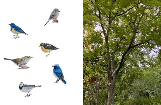 野鳥のイラスト