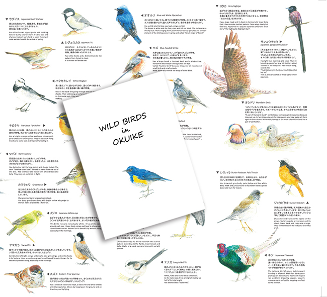 野鳥マップ